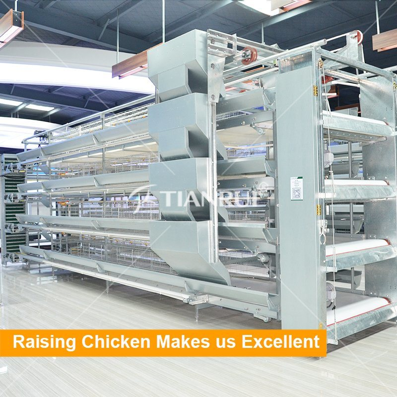 China Chicken farm project poultry farming equipment for