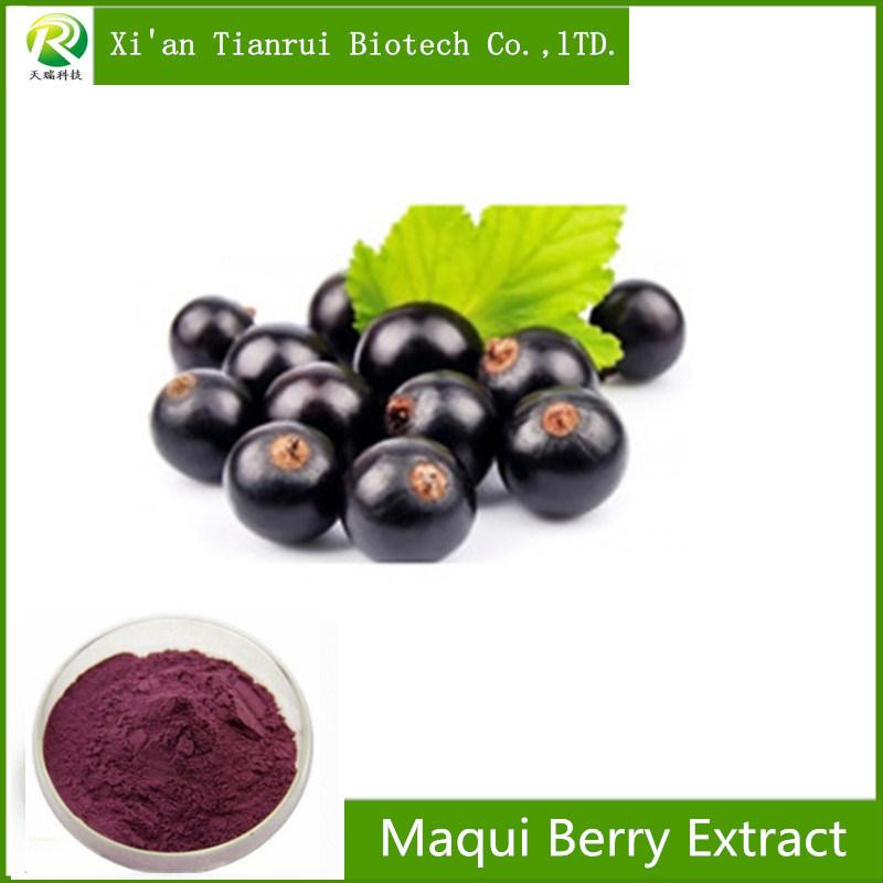 China Factory Supply 100 Natural Maqui Berry Extract Powder China Maqui Berry Extract Maqui Berry Powder