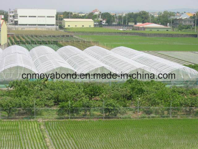 100% New HDPE with UV Knitted Anti Insect Netting