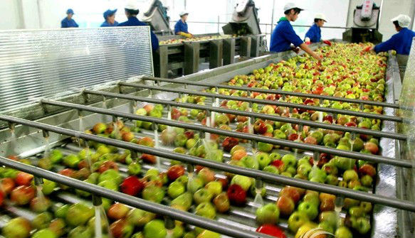 Fruit Fresh Fruits Strawberry Buleberry Paste Jam Production Line pictures & photos