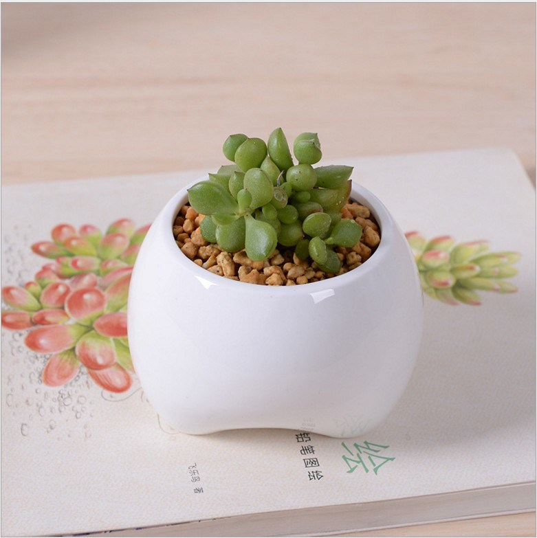 Ceramic Ivory Small Tooth Shaped White Flowerpot pictures & photos