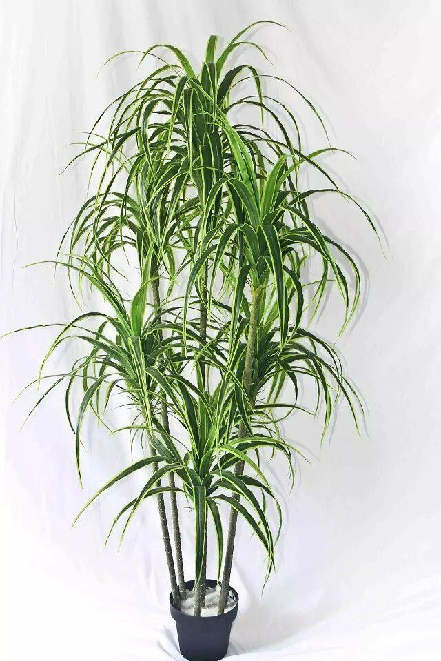 china best selling high quality artificial plants of yucca gu Quality Fake Plants