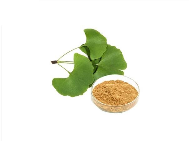 Ginkgo Biloba Extract Capsules