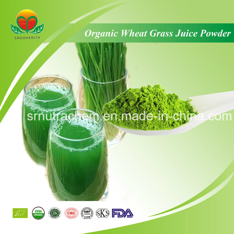 Manufacturer Supplier Organic Wheat Grass Juice Powder