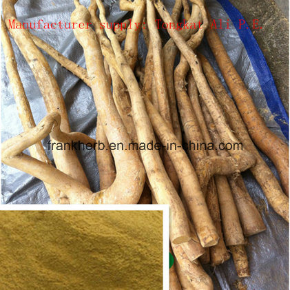 China Tongkat Ali Extract Pure Tongkat Ali Root Powder China Tongkat Ali Extract Tongkat Ali P E