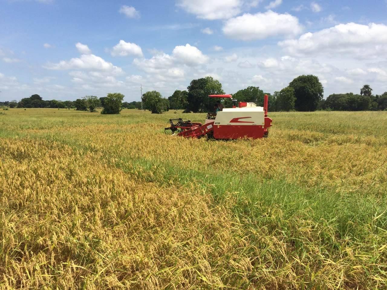 baef2f19e40e2 China Crawler, 2.0m Cutting Width, 88HP Rice Harvester Manufacturer ...