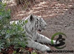 La jaula del tigre, Tigre valla de malla malla, malla de Gabinete de tigre