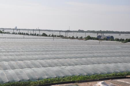 La agricultura Anti-edad PE película para gases de efecto