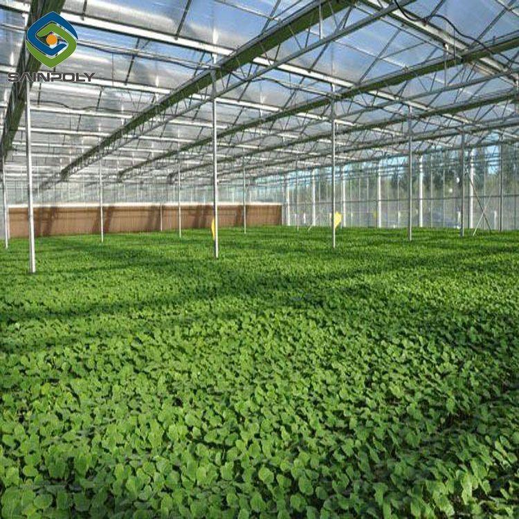 토마토를 위한 겹켜 유리제 농업 온실