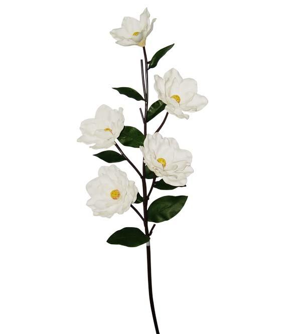 Magnolia3094-2 (A)