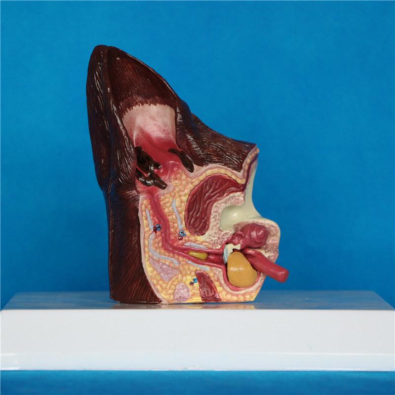 Foto de Científicos de Biología Animal de la enseñanza de la oreja ...