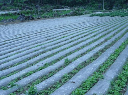 PE 농업 잡초 방제 뿌리 덮개 필름