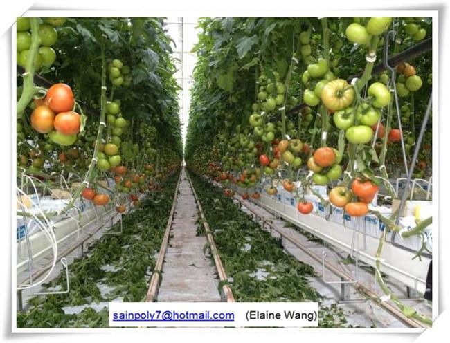 Коммерческие пластиковые пролить выбросов парниковых газов для помидора