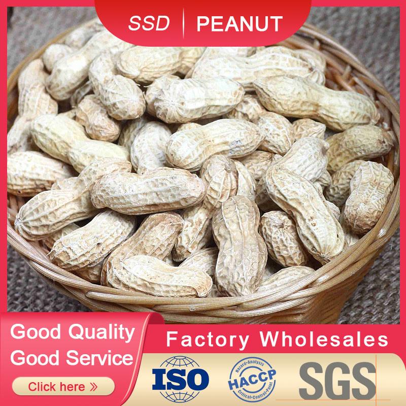 Melhor qualidade de nova cultura do amendoim em casca para venda