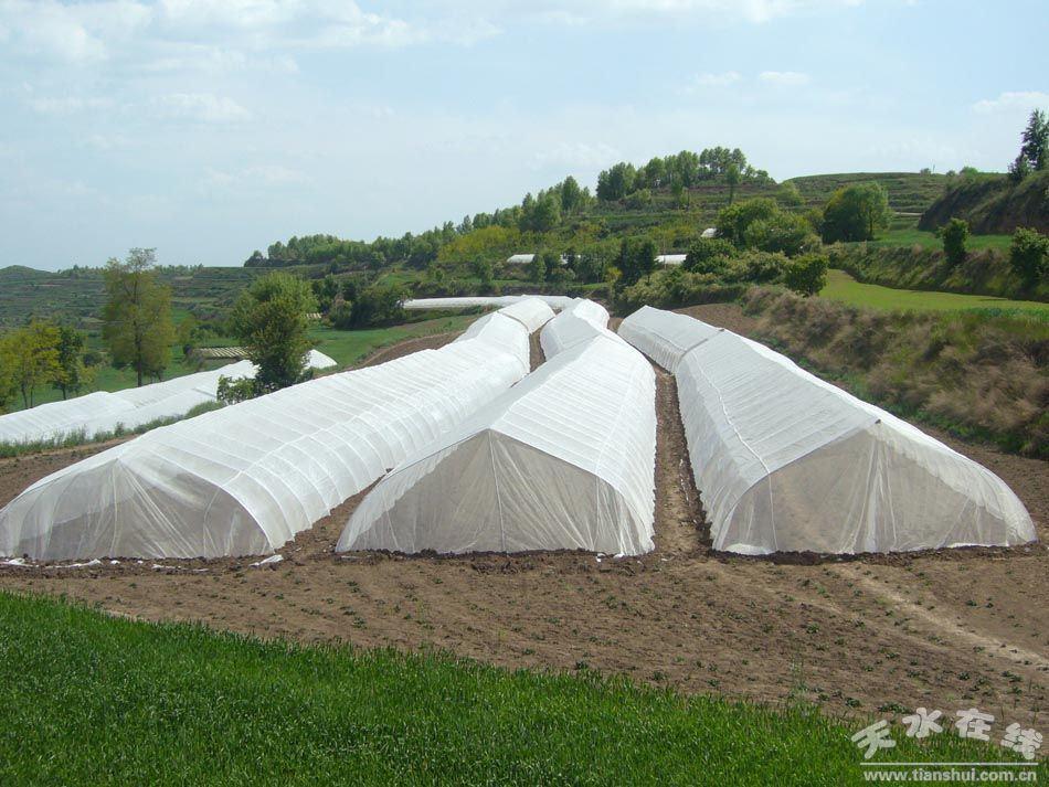 HDPEの白い農業の反昆虫のネット(50-240 g/m2)