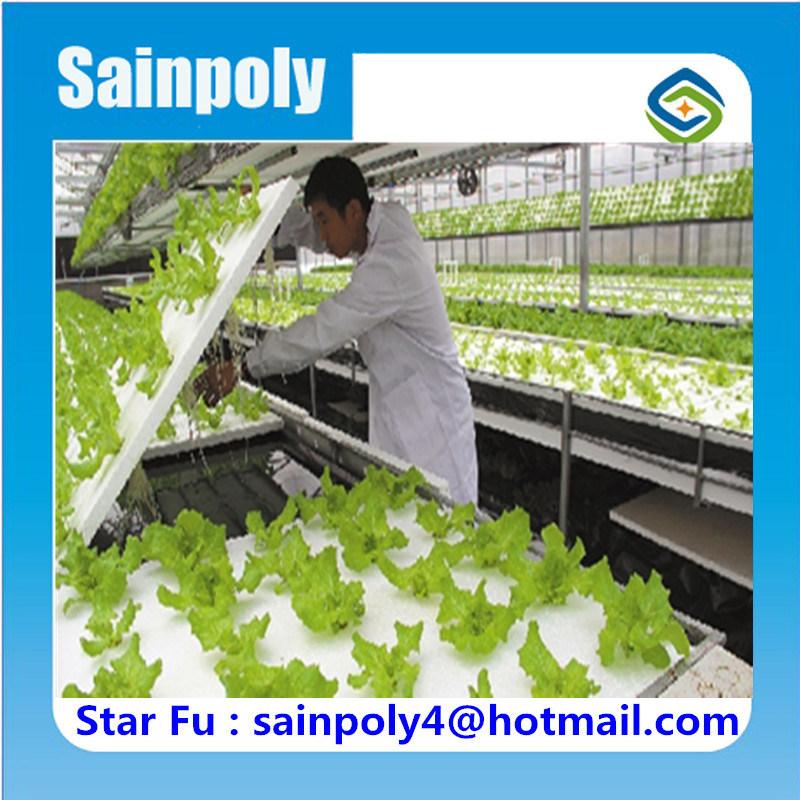 Bestes Gemüse-Zucht-Wasserkulturgewächshaus für Verkauf