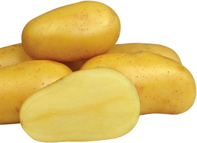 soorten aardappelen; gelige aardappelen