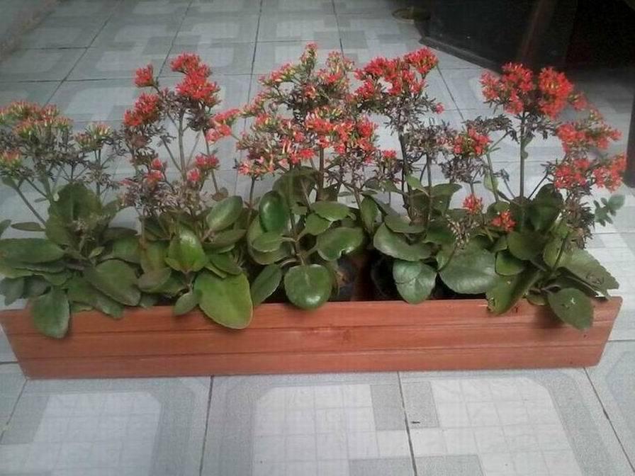 Fleur de bois le semoir