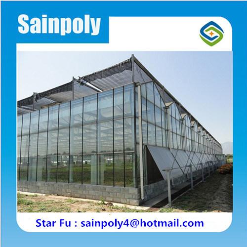 Serra di vetro di prezzi di fabbrica per il crescente cetriolo