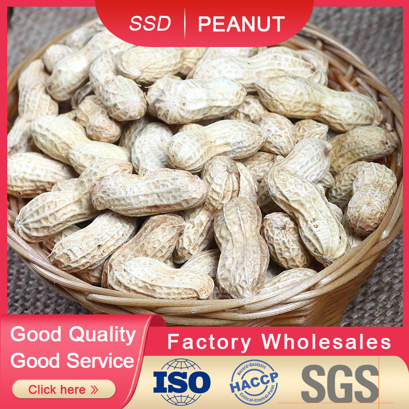 Dans le shell d'arachide en 2019 Hot Sale de meilleure qualité fabriqués en Chine 9/11