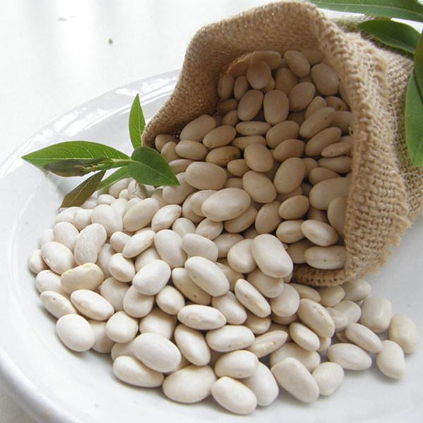 extracto de frijol blanco riñón singapur