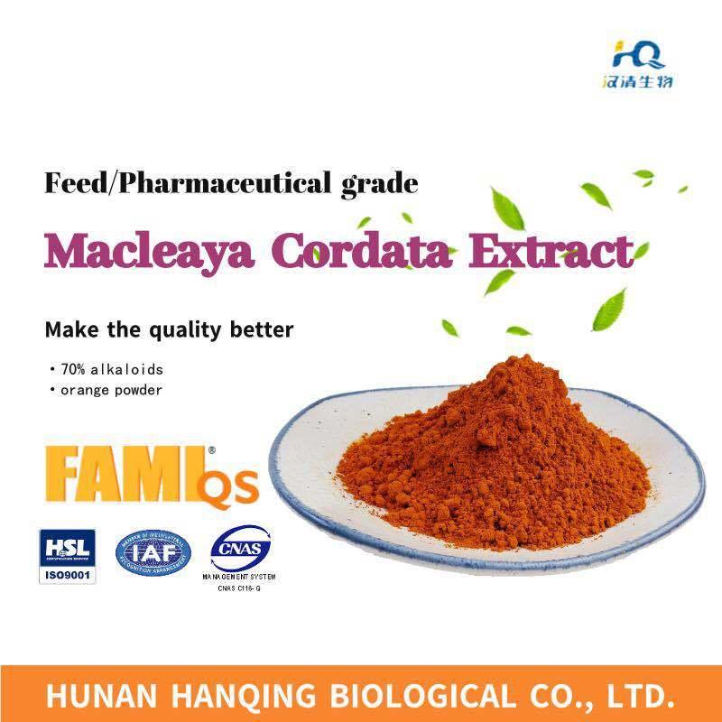 Pureza elevada 70%, grau de Alimentação Macleaya Cordata extraia