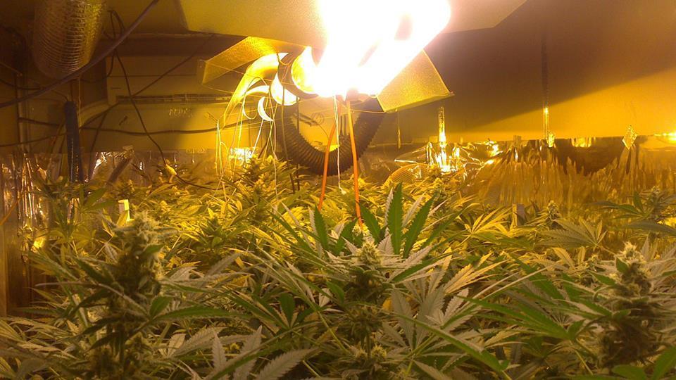 Megnetic Induction/LED赤く青く完全なスペクトルのプラントは温室の照明のために軽く育つ