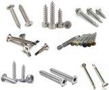 Stainless Steel Trim Head Self Tapping Screw/Drilling Screw/Wood Screw/Furniture Screw/Hex Flange Head Screw/Hex Socket Cap Screw/Drywall Screw/Chipboard Screw