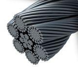 Galvanized and Ungalvanized Steel Wire Rope (6*37+FC)
