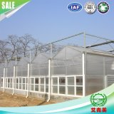 Polycarbonate Sheet and PC Sheet The Multi-Span Greenhouse for Farming