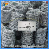 Hebei Electro Galvanized Barbed Wire