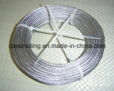 Galvanized Steel Wire Rope in Competitive Prices