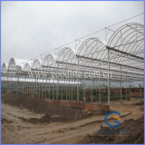 Transparent/Opal White Policarbonate Polycarbonate for Greenhouse
