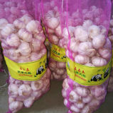 Fresh Normal White Garlic High Quality Size 5-6cm to Malaysia
