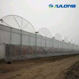 Tropical Plastic Film Greenhouses with Commercial Hydroponic Growing System for Tomato Strawberry and Lettuce