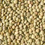 Lowest Price China Supplier Grade AAA Green Lentil