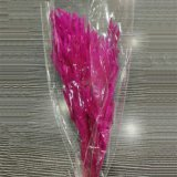 Nice and Cheap Decorative Preserved Stone Pine Flower for Decoration