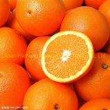 Fresh Chinese Decilious Navel Orange with More Juicy Fruit