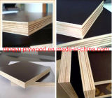 Black/Brown Film Faced Plywood, Marine Plywood, Construction Plywood, Phenolic Plywood