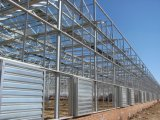 Hot Sale Glass Greenhouse for Agriculture