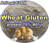 Wheat Protein for Animal Feed with Competitive Price