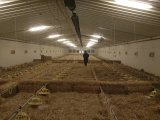 Automatic Broiler Feed Equipment on Poultry Farm