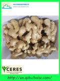 Wholesale Chinese Wild Fresh Ginger Export