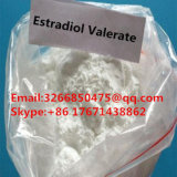 Female Sex Hormone Anti Estrogen Steroids Estradiol Valerate for Health