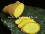 Chinese Ginger in Top Quality