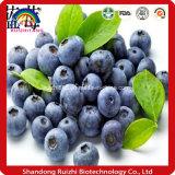 Ruizhi Supply Natural Fresh Blueberry Powder Bulk