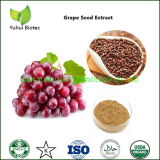 100% Natural Grape Seed Extract OPC 95% Supplement