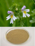 High Quality Natural Eyebright Herb Extract on Sell