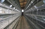 Hot Galvanized Automatic Chicken Cage/Poultry Farm House Design