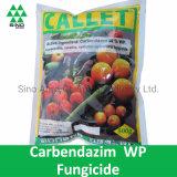 Carbendazim 50% Wp of Fungicide Pesticide